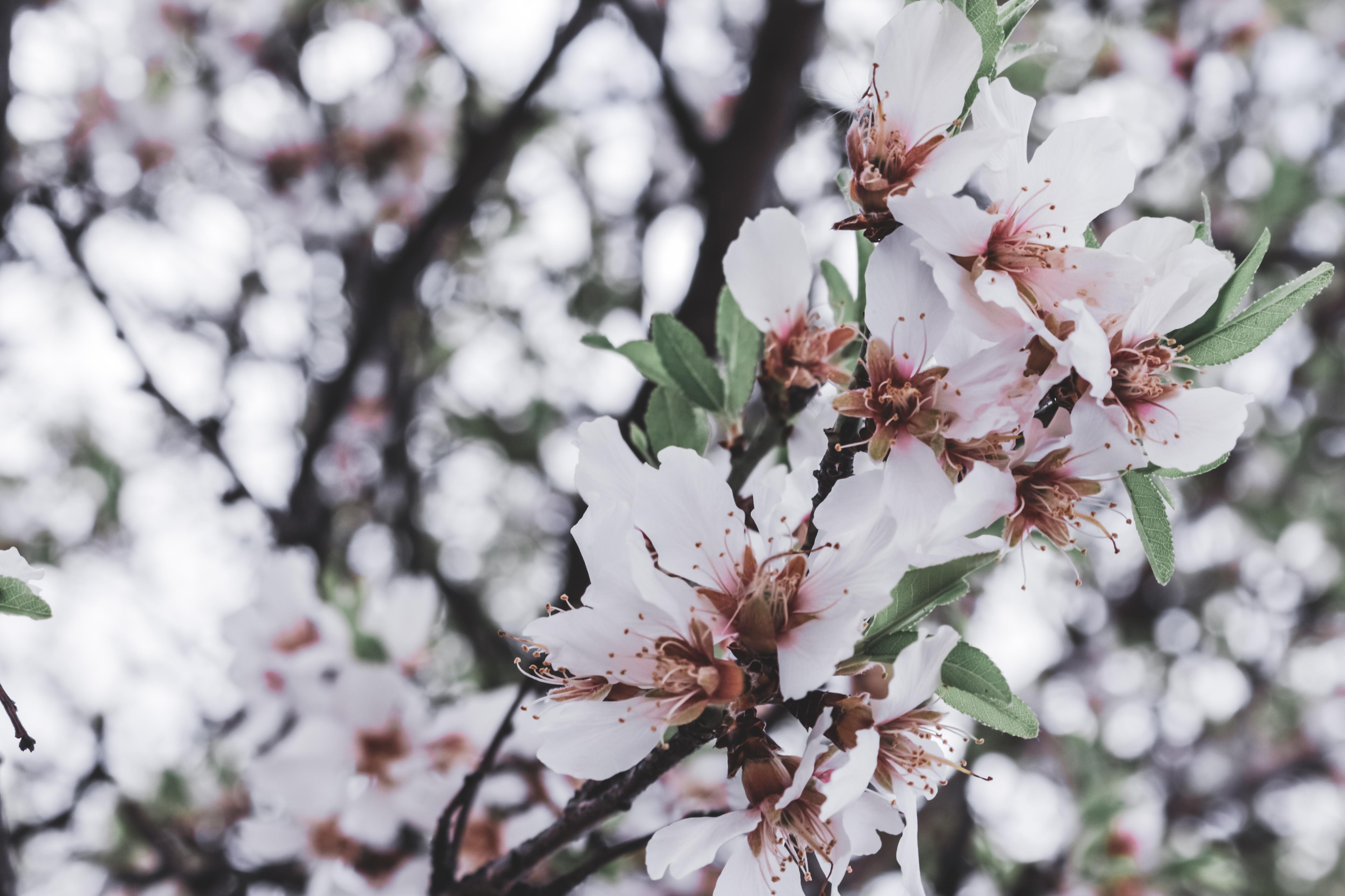 Foto de flores blancas y hojas verdes de cerca