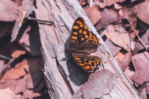Spring Moodboard: Foto de una mariposa naranja de cerca