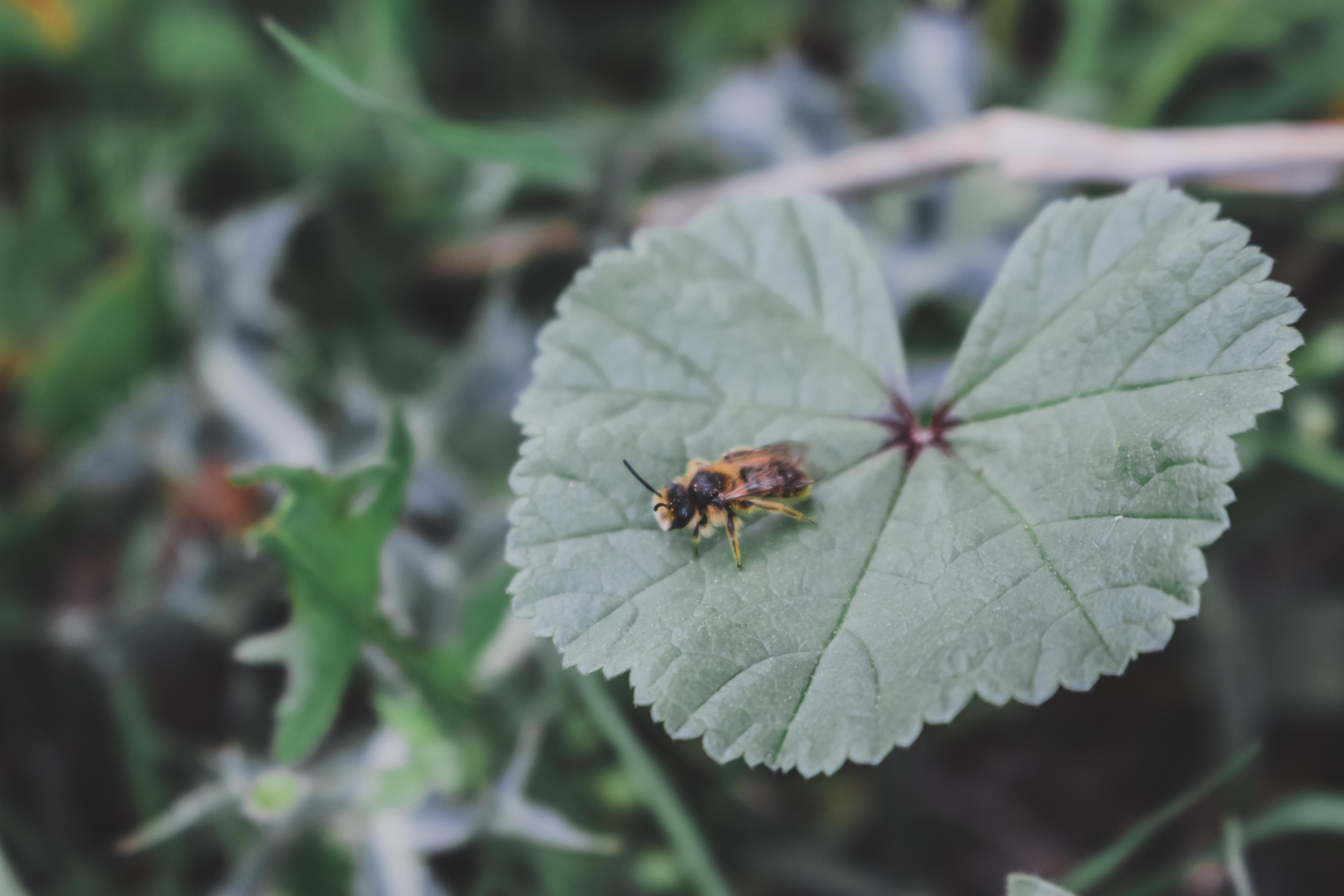 Foto de una hoja de cerca con una abeja posada