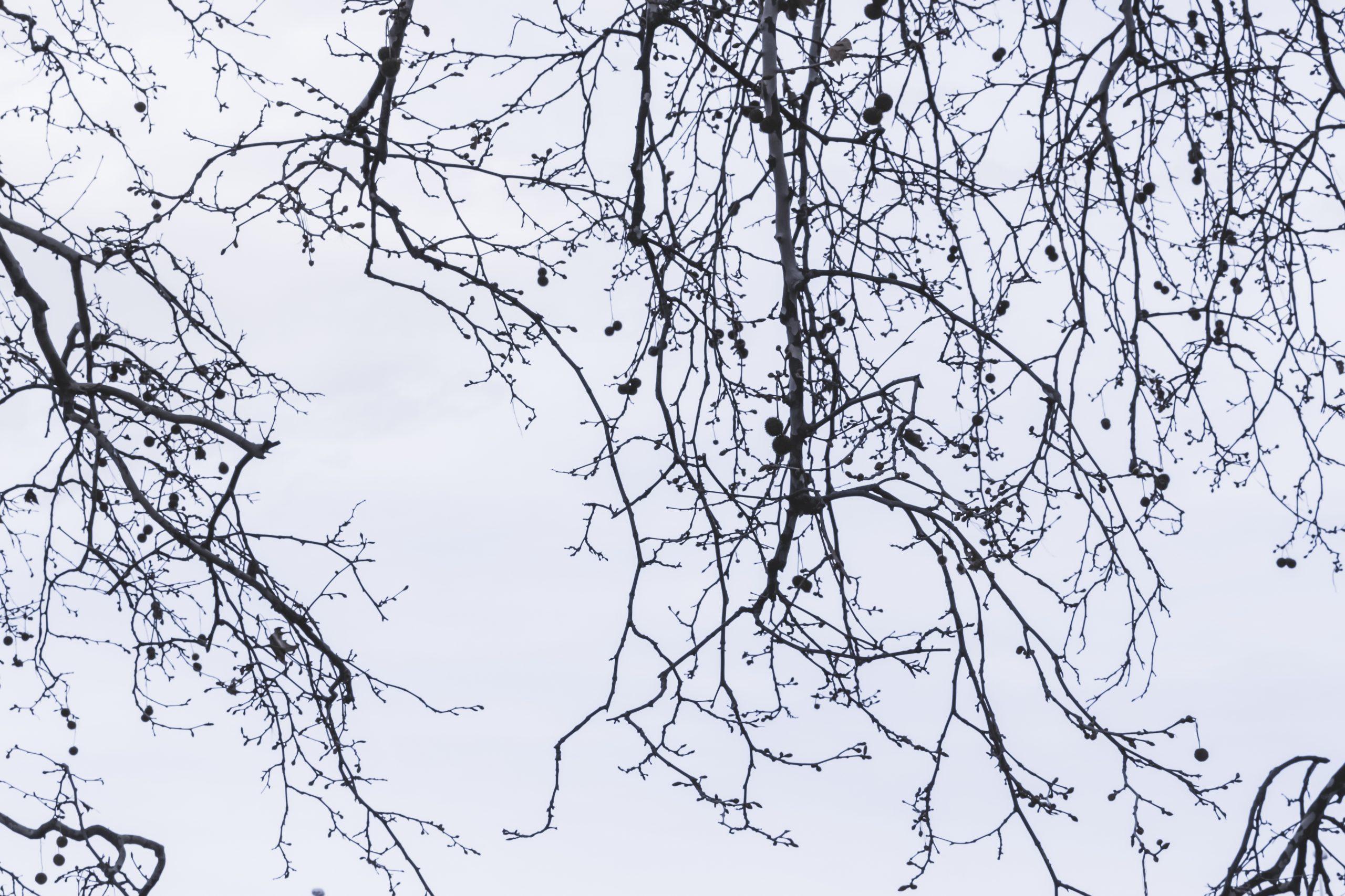 ramas y cielo