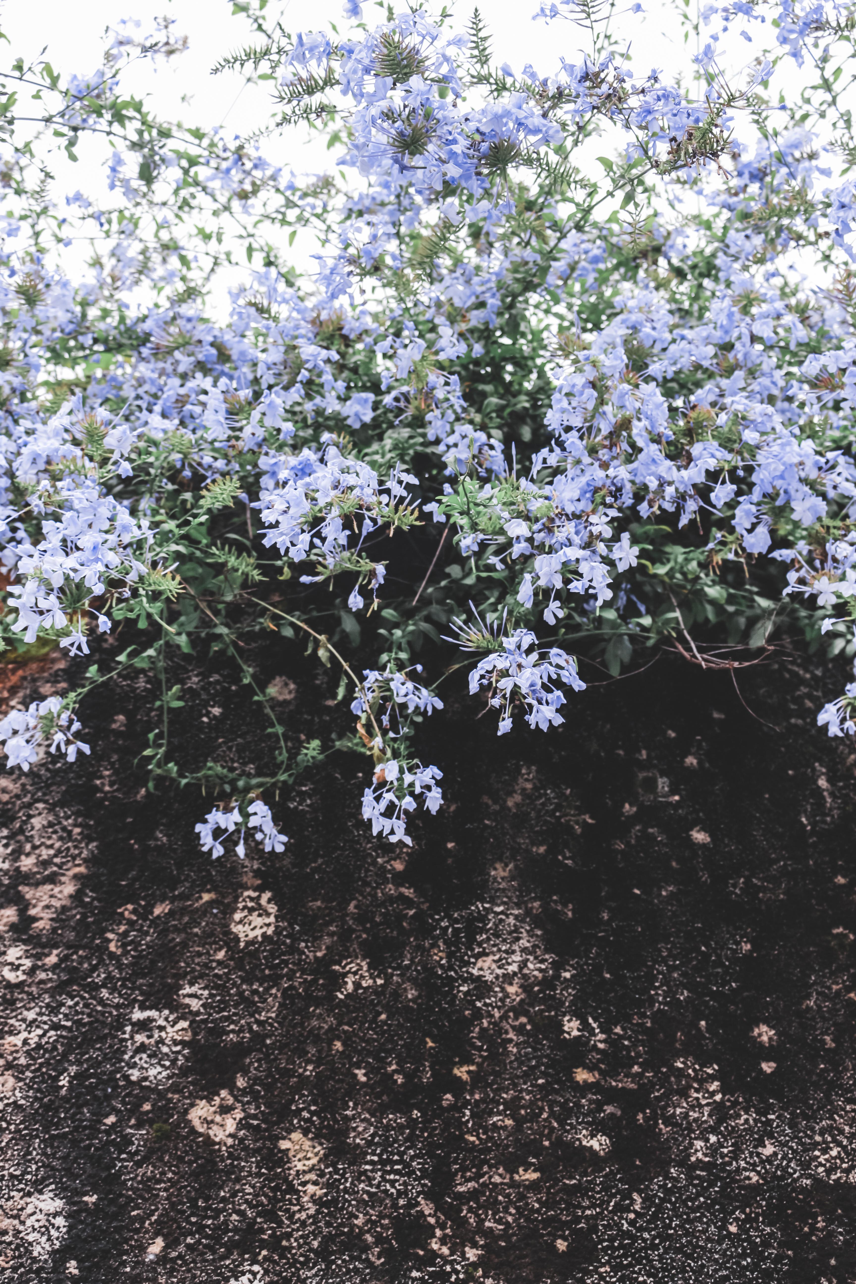 Spring Moodboard: Foto de un muro de piedra con arbustos y flores en la parte superior